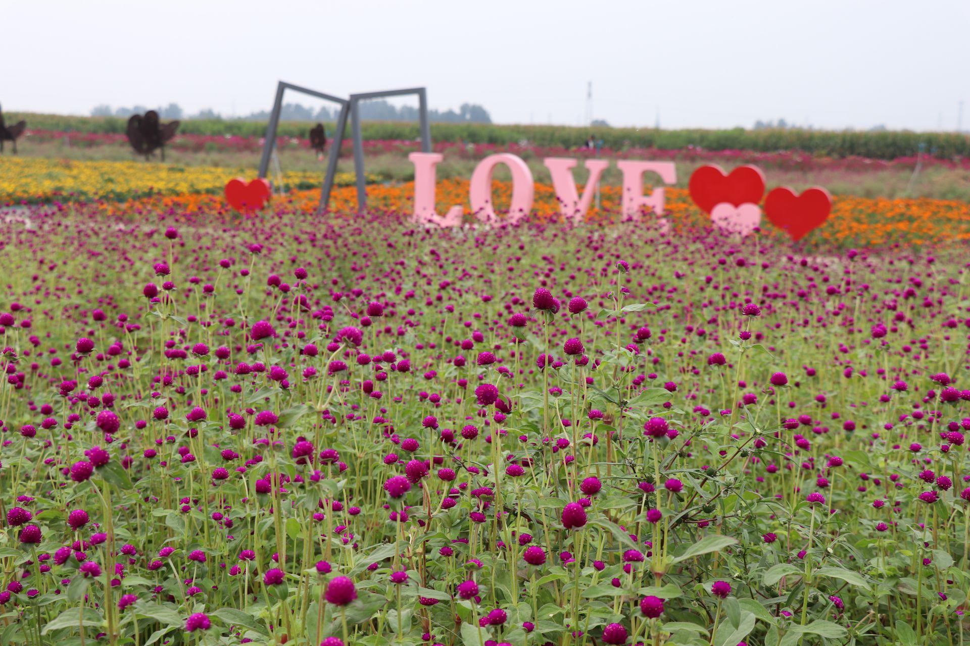 广平县云溪花海盛开 爱为主题 感受浪漫
