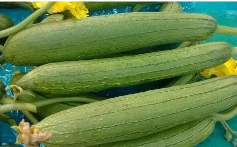 三伏天最适合吃丝瓜 清火解暑又防燥