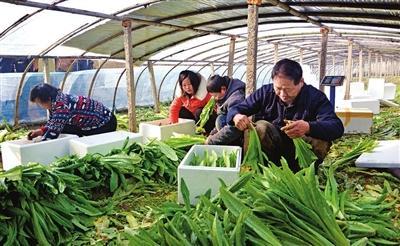 邯郸精准服务100家农业产业化龙头企业