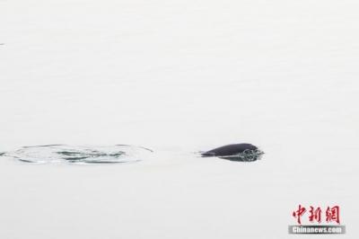 国办:将对中华鲟等珍稀濒危水生生物实施抢救性保护