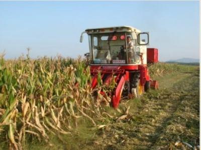 邯郸玉米秸秆还田率逾90%
