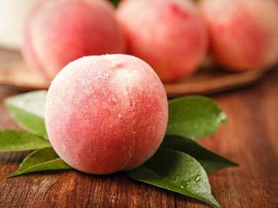 永年:四季仙桃俏销 农民亩收过万