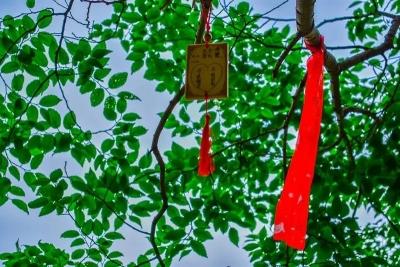 东太行重阳节活动新鲜出炉
