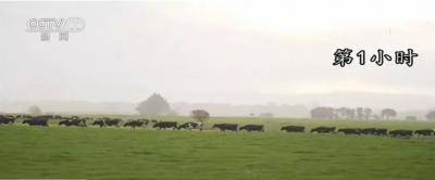 """一瓶保質期只有15天的新西蘭鮮奶的奇幻""""漂流"""""""