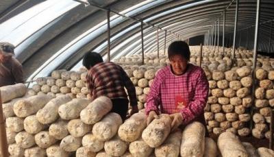 """魏县""""冬闲""""变""""冬忙"""" 加快现代农业发展"""
