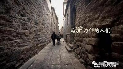 央视《乡土》栏目播出涉县《与驴为伴的人们》!