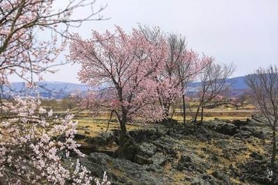 2019河北春季赏花地图来了 有些赏花地可是全国知名的