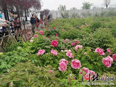 邯郸广平举办牡丹园大型古筝展演