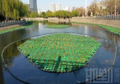 3000多平米绿色生态浮岛点亮邯郸水上景观