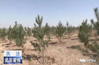 """邯郸加大生态修复治理 让武安废弃矿山披绿""""重生"""""""