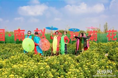 【壮丽70年·奋斗新时代——县域经济看特色】肥乡:小菊花成就大产业