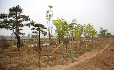 邯郸市三陵乡:窑里窑外 环绕发展