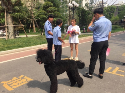 我市主城区集中开展不文明养犬专项整治行动