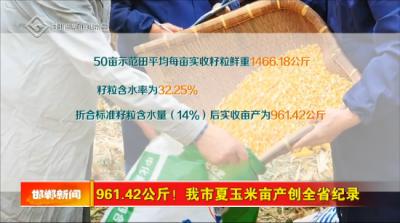 亩产961.42公斤!邯郸夏玉米高产示范田亩产创河北省新纪录