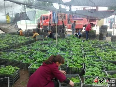 邯郸这两地入选河北省产业扶贫典型案例