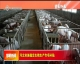 河北实施稳定生猪生产专项补贴