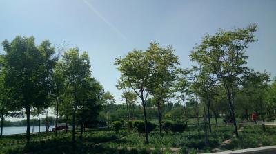 """""""绿美成安"""":今年完成造林1.85万亩 森林覆盖率达26.85%"""