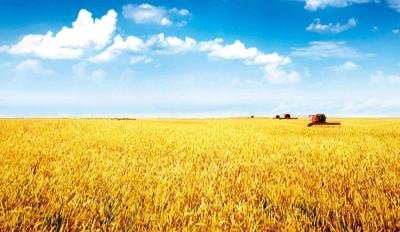 邯郸农信全方位支持地方经济发展