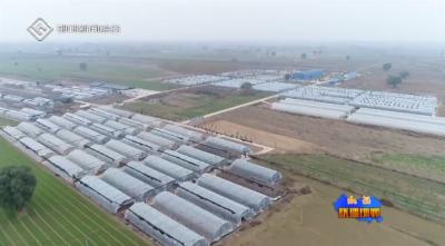 """魏县:大棚食用菌产业为群众撑起""""致富伞"""""""