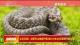 生態環境部:擬將野生動物保護情況納入中央生態環境保護督察範疇