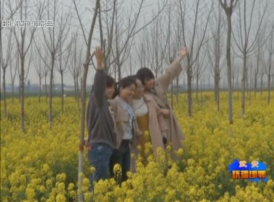 武安:油菜花开满眼春