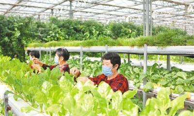 邯郸:农业产业化引领乡村振兴