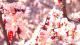 紅杏枝頭春意鬧,涉縣這個地方的花海驚艷了春天!