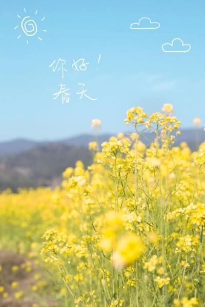 看!邯郸的油菜花美成了手机壁纸~