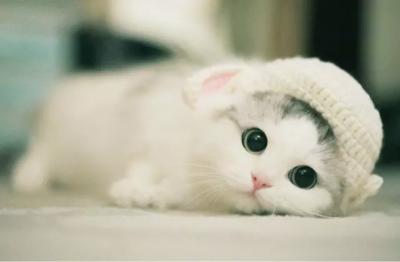 研究显示猫对新冠病毒易感