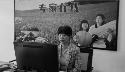 """【云经济•新模式】""""智慧""""领跑,藁城农业大步迈向现代"""