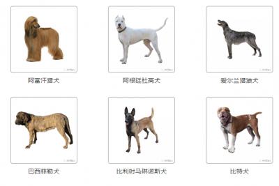 """@养犬的市民们:邯郸市""""文明养犬""""又出新规"""