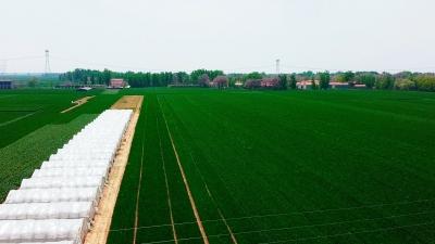 邯郸V视|特色养殖 小虫大棚结金实——前杨村的产业脱贫路