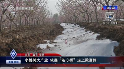 """小桃树大产业 依靠""""连心桥""""走上致富路"""