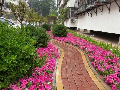 社区新貌:裕康小区改容颜 公园就在门口前