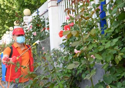 邯郸市警校社区:除草杀虫 鲜花扮城