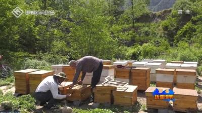 涉县赵全喜:甜蜜的养蜂脱贫路