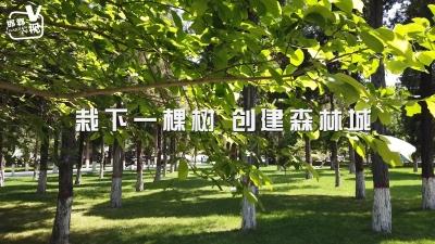 邯郸V视|栽下一棵树 创建森林城