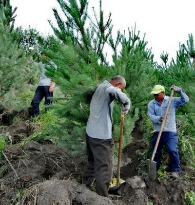 千方筹措持续发力 河北抢抓造林时机加快创建森林城市