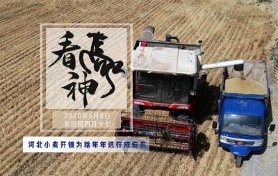 河北小麦开镰为啥年年选在成安县 看神马