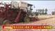 我市示範田小麥畝產達771.65公斤再創新高