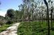 邯鄲市城管執法局圓滿完成主城區春季綠化提升工作