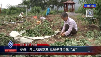 """涉县:向土地要效益 让经果林再生""""金"""""""