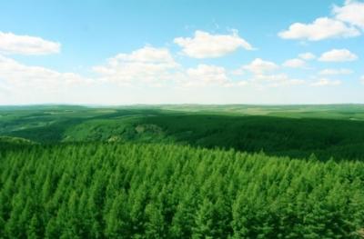 截至2019年底河北省森林面积达9854万亩 覆盖率35%