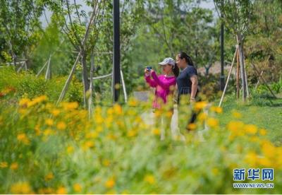 肥乡区:废弃坑塘变身生态公园