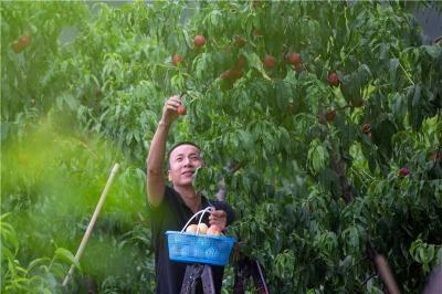 武安:特色果品种植富乡村