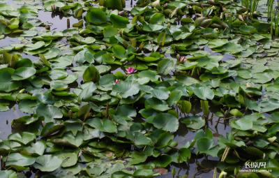 暑期游玩好去处!邯郸植物园