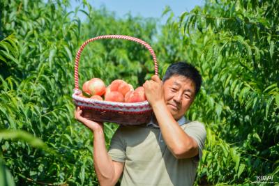河北邯郸:鲜桃种植富农家