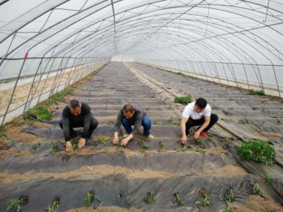 【决胜2020:我们村里最熟悉的陌生人】65座蔬菜大棚 种出脱贫致富新希望