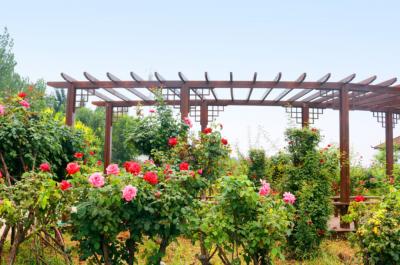 复兴区:有一种花,看到就想起一方园