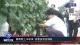 邯郸:葡萄爬上丰收架 消费扶贫促增收